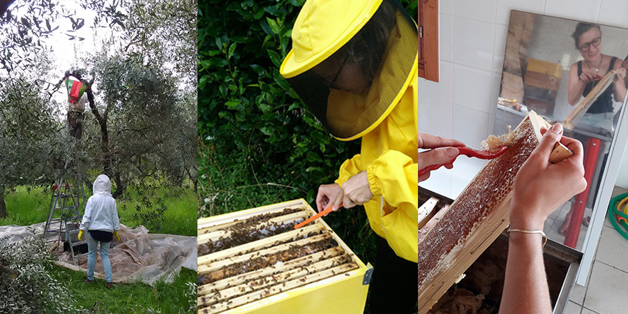 beekeeping tuscany experience