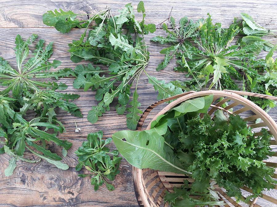edible-wild-herbs