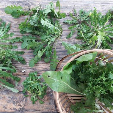 The Recognition and collection of Spontaneous Herbs in Versilia