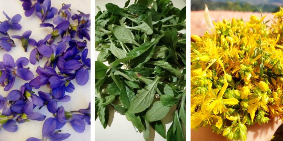 erbe spontanee-fiori e piante edibili