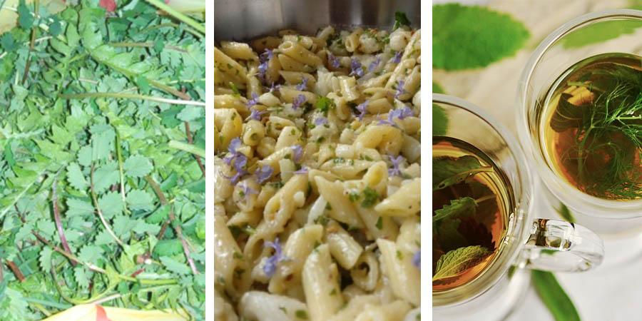 ricette-pimpinella-erbe spontanee