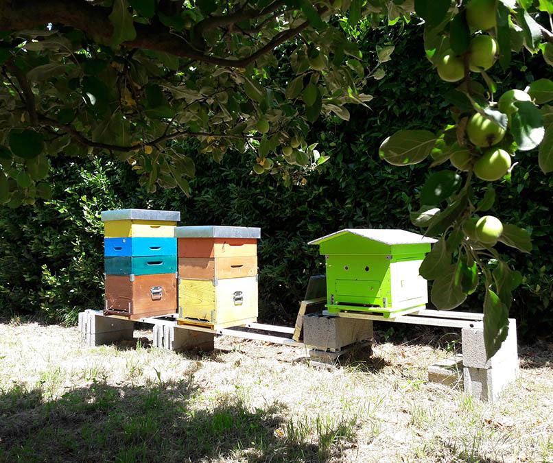 apicoltura-bio-camaiore