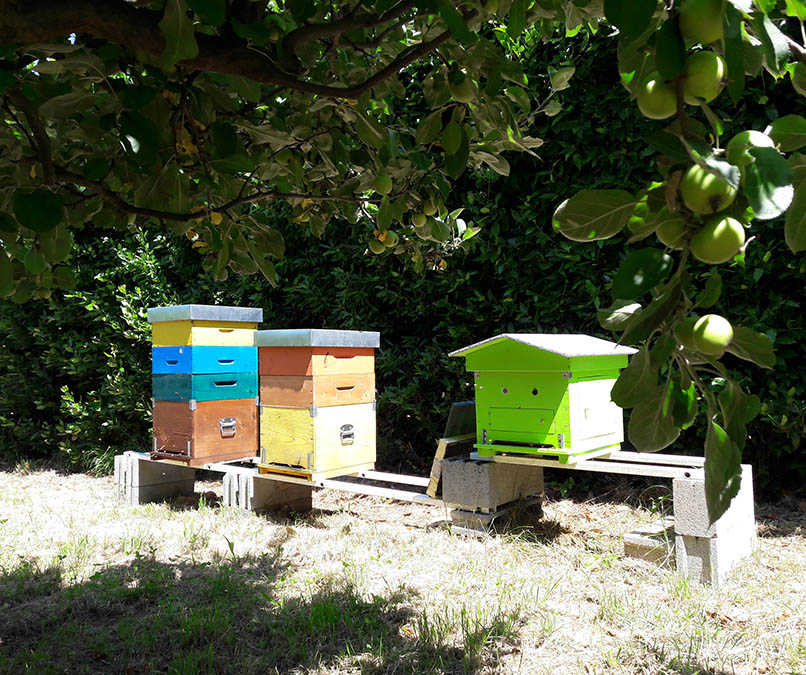 borgo4case - apiario