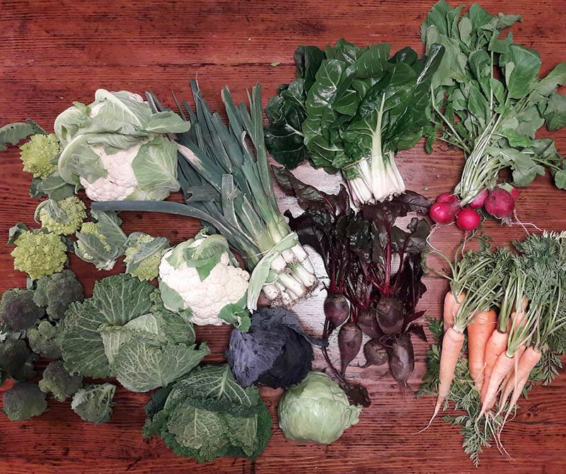 cassetta-verdure-bio-camaiore