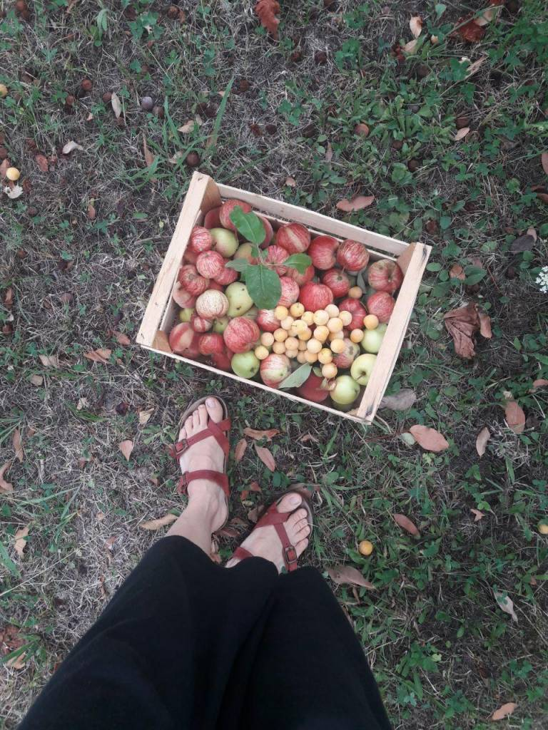 apple-permaculture-tuscany