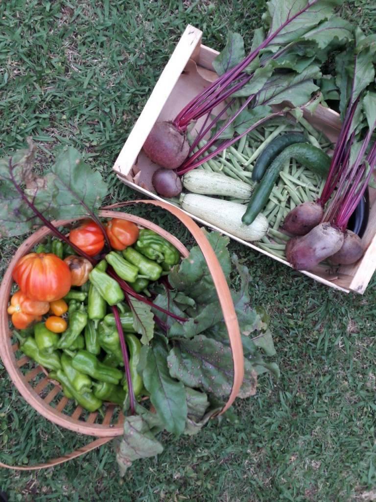 retreat sostenibile camaiore - food